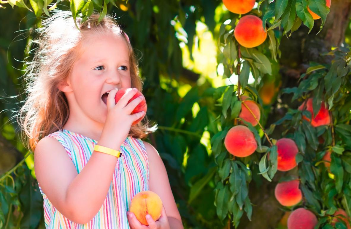La qualité des fruits du Domaine Bayard